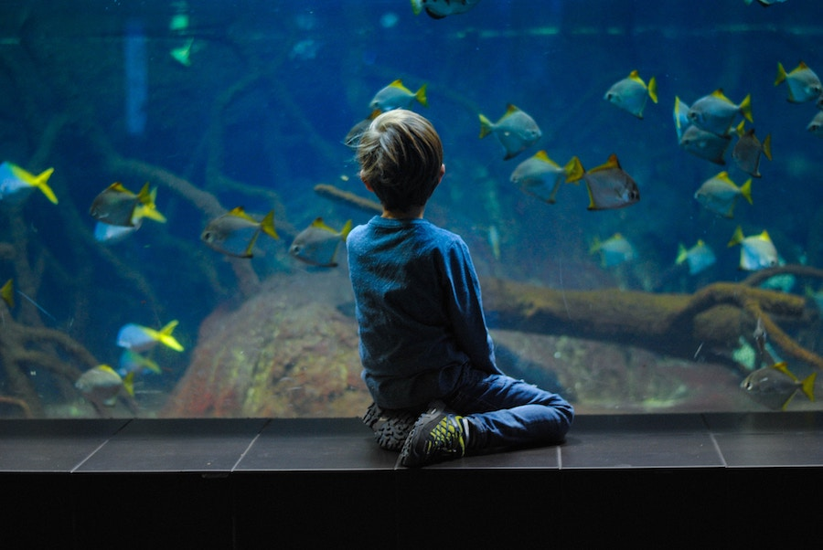 Boy watching fish